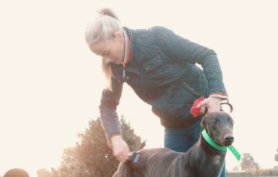 Deirdre Barry grooming one of her greyhounds