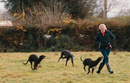 Deirdre Barry enjoying a run in the garden with her young greyhounds