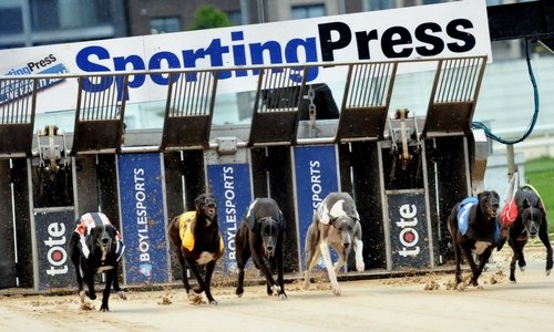 Don't miss the Sporting Press Irish Oaks on now in Shelbourne Park Greyhound Stadium